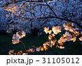 仁和寺の夜桜 31105012