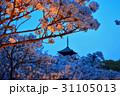 仁和寺の夜桜 31105013