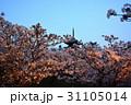 仁和寺の夜桜 31105014