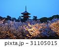 仁和寺の夜桜 31105015