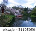 京都神泉苑の春 31105050