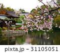 京都神泉苑の春 31105051