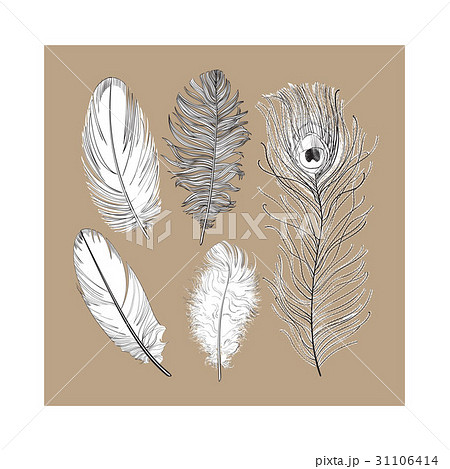 Hand drawn set of various black and white bird 31106414