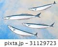 さんま 秋刀魚 海中のイラスト 31129723
