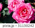 バラの花 31130242