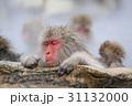 地獄谷野猿公園の日本猿 31132000