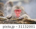 地獄谷野猿公園の日本猿 31132001