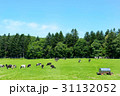 大地 牛 北海道の写真 31132052