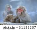 地獄谷野猿公園の日本猿 31132267