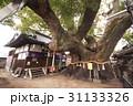 三島神社の薫蓋樟(大阪府門真市) 31133326