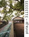三島神社の薫蓋樟(大阪府門真市) 31133335