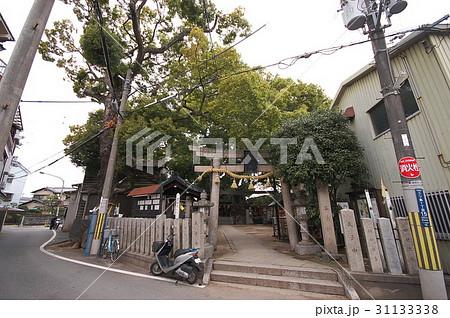 三島神社の薫蓋樟(大阪府門真市) 31133338