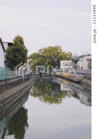 稗島のくす(大阪府門真市) 31133999