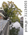 稗島のくす(大阪府門真市) 31134003
