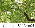 稗島のくす(大阪府門真市) 31134004