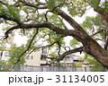 稗島のくす(大阪府門真市) 31134005