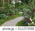 秋薔薇の咲く石畳の小径 31137098