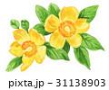 hypericum17531pix7 31138903