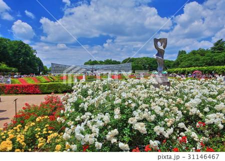 神代植物公園春のバラフェスタ 31146467