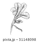 Iris flower ink sketch on white background 31148098