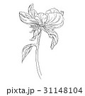 Peony flower ink sketch on white background 31148104