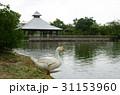 アヒル あひる 鴨の写真 31153960