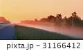 木 米国 パノラマの写真 31166412