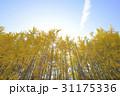 秋 季節 紅葉の写真 31175336