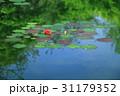 睡蓮の池 31179352