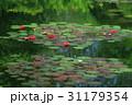 睡蓮の池 31179354