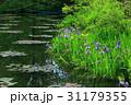 菖蒲の池 31179355