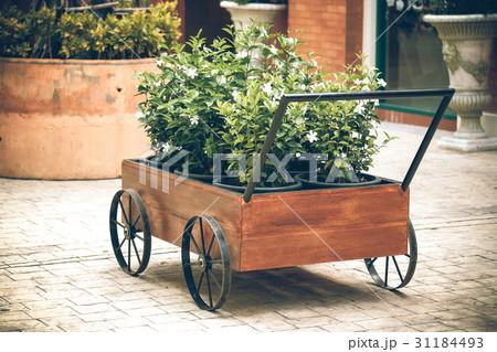 flowers in a potの写真素材 [31184493] - PIXTA