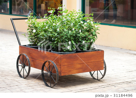 flowers in a pot, garden decoration ideasの写真素材 [31184496] - PIXTA