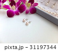 真珠のピアス 31197344