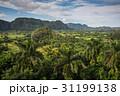 キューバ グリーン 緑の写真 31199138