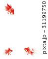 金魚 暑中見舞い 31199750