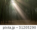 高敞郡 木 竹の写真 31205290