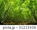鮮やかな森 31215436