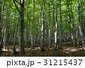 鮮やかな森 31215437