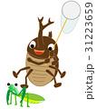 カブトムシの昆虫採集 31223659