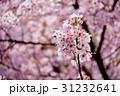花 フラワー お花の写真 31232641
