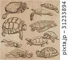 動物 芸術作品 コレクションのイラスト 31233894