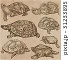 動物 芸術作品 コレクションのイラスト 31233895