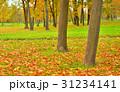 樹木 樹 ツリーの写真 31234141