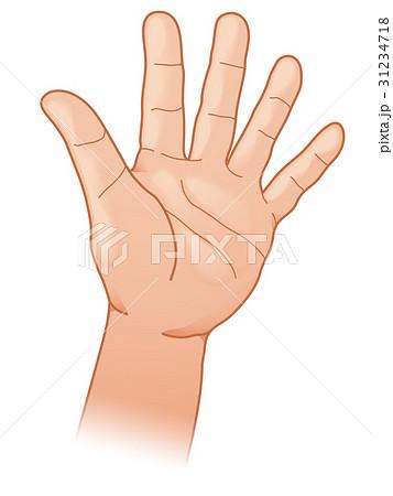 指五本 手のひら 31234718