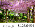 千光寺公園 藤 藤棚の写真 31236454