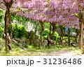 千光寺公園 藤 藤棚の写真 31236486