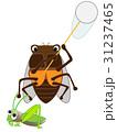 セミの昆虫採集 31237465