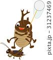 カブトムシの昆虫採集 31237469