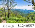 山 新緑 木の写真 31240557